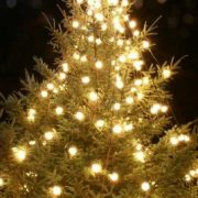 90_15_57---Christmas-Tree_web